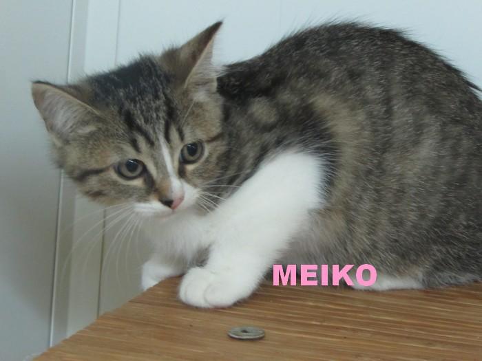 ADOPTION DE MEIKO Meiko_12