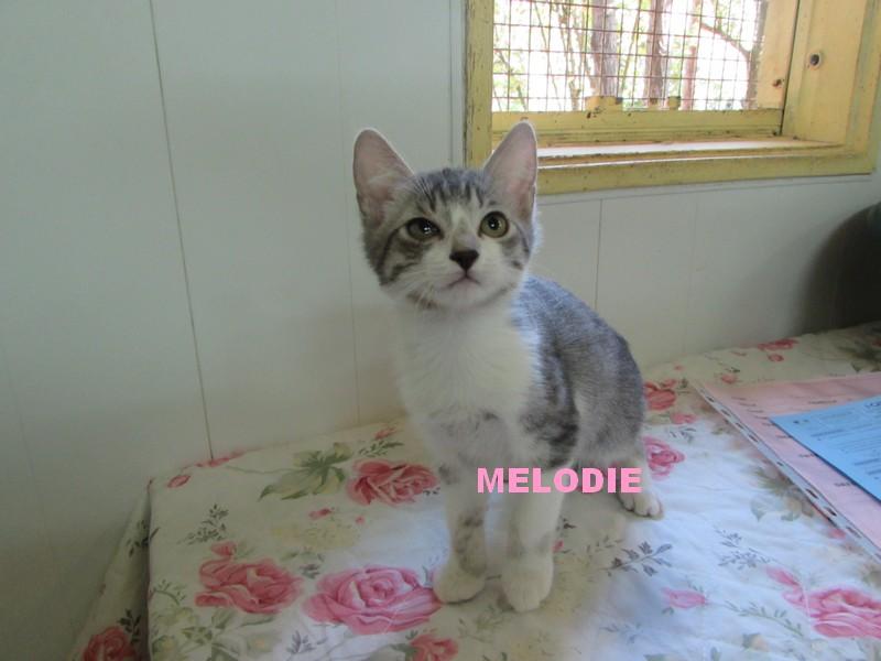 ADOPTION DE MELODIE Mzolod10