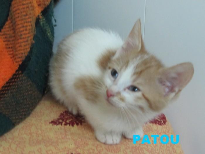 NOUVELLES DE PATOU Patou12
