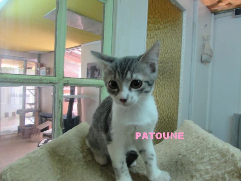 ADOPTION DE PATOUNE Patoun11