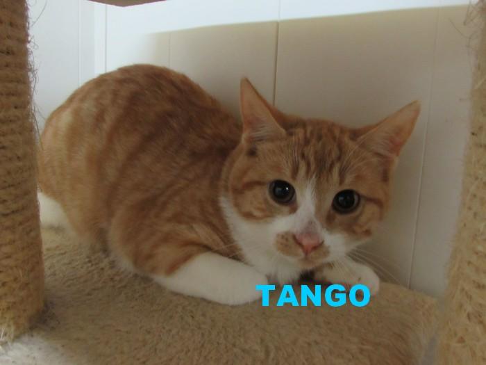 NOUVELLES DE TANGO Tango11