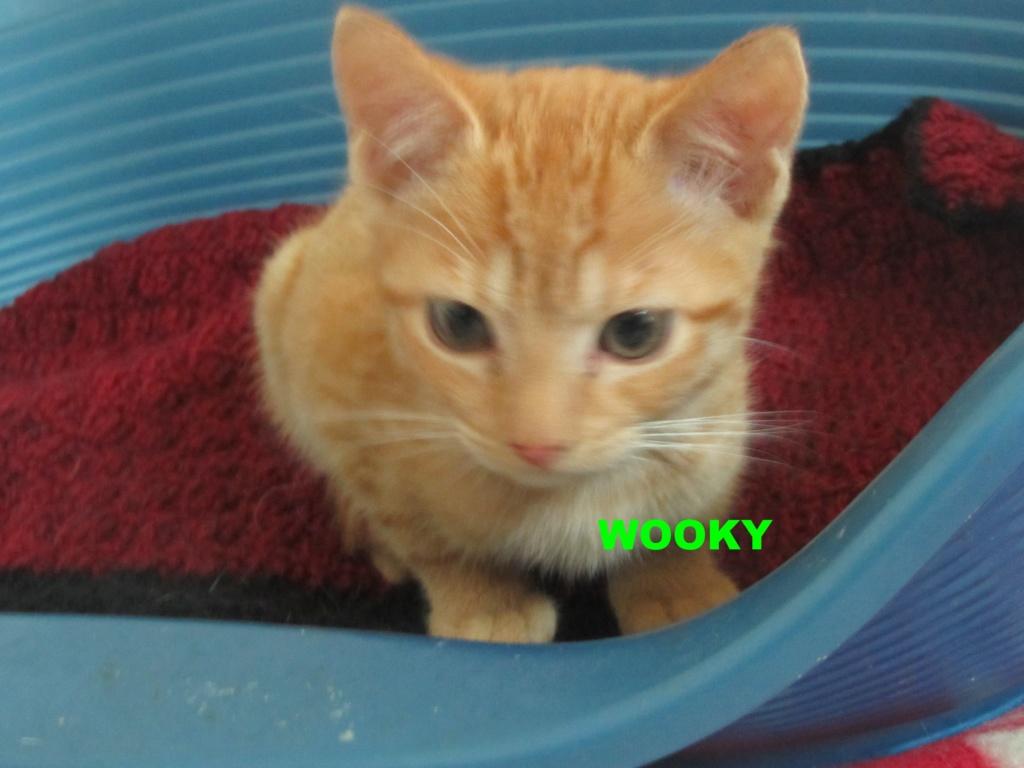 WOOKY Wooky_10
