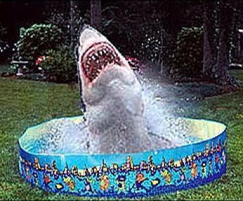 GUEST WEEK - June  10th - 16th Shark-11