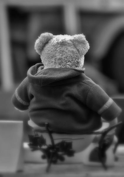 Teddy à la brocante P4283310