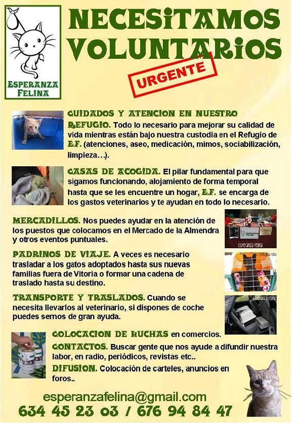 NECESITAMOS VOLUNTARIOS Cartel10