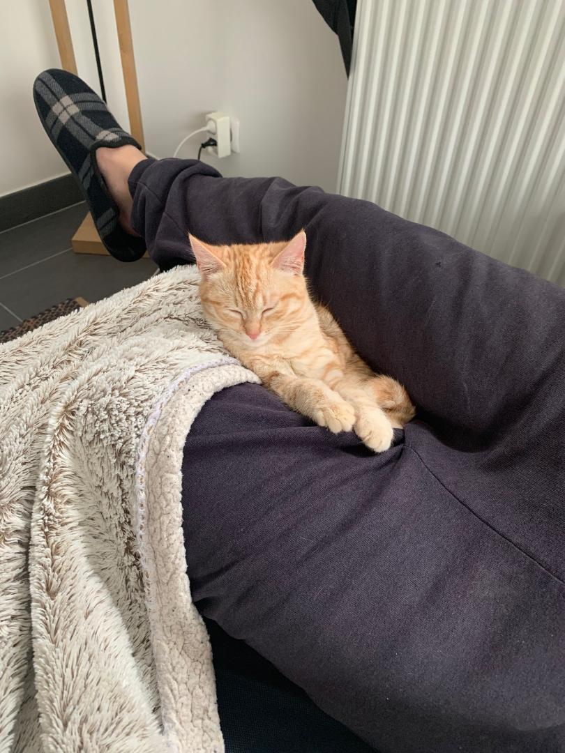 GINGER ex ROUSSETTE  (82949) ADOPTEE LE 12 DECEMBRE 2018 Ginger12