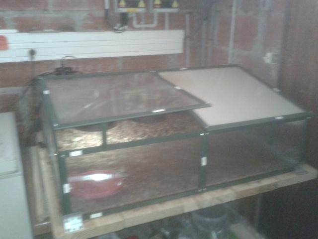 Terrarium hivernal pour tortue adulte  20130510