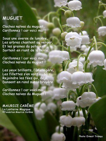 Vive le 1er Mai 2013 ! Muguet11