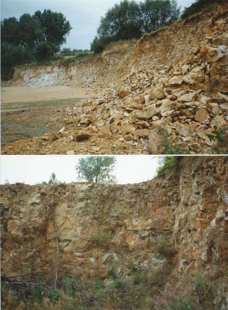 fossiles du Turonien (Crétacé supérieur) Saint Denis Img14