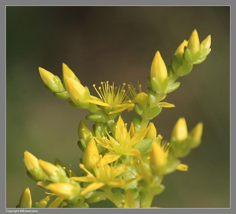 Wildblumen ( Sammelthread) - Seite 3 Wasse104