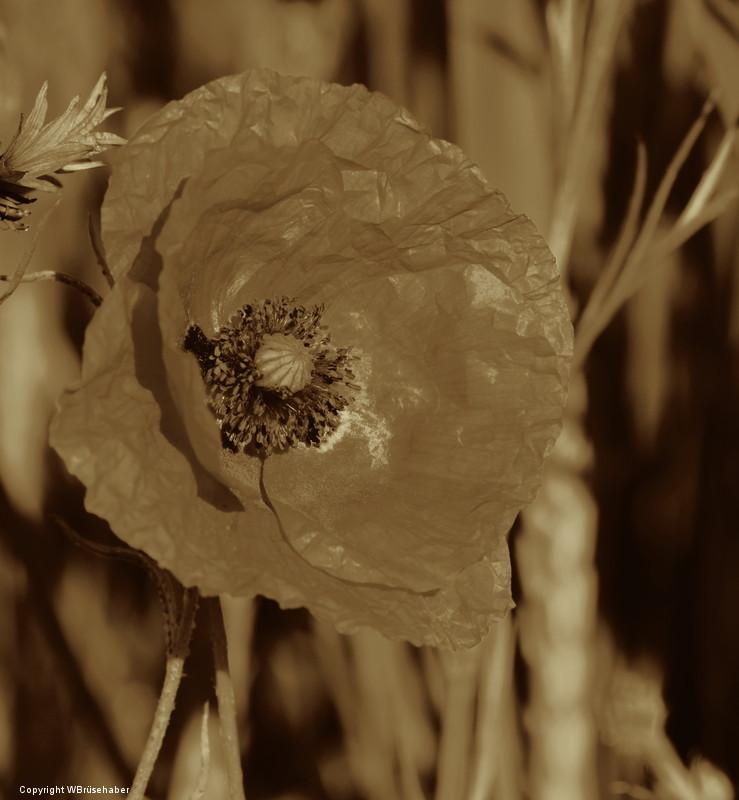 Wildblumen ( Sammelthread) Wasser58