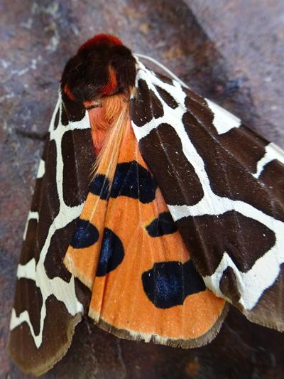 fil(et) à papillons - Page 14 Eacail12