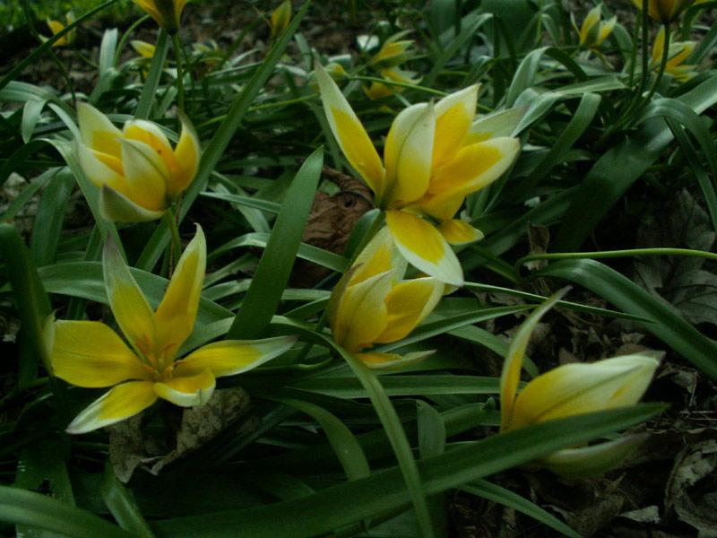 Wildblumen ( Sammelthread) Pict0010