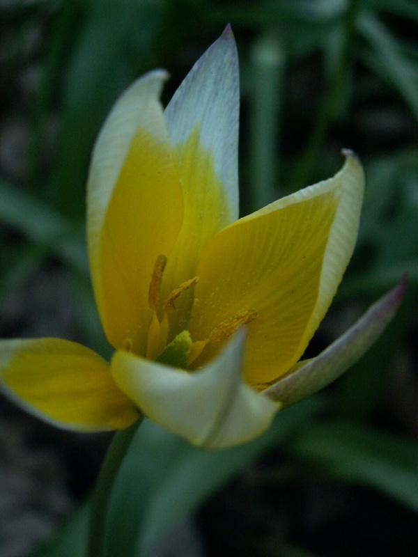 Wildblumen ( Sammelthread) Pict0011