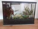 Filtre superfish aqua flow 50 Dscf6925