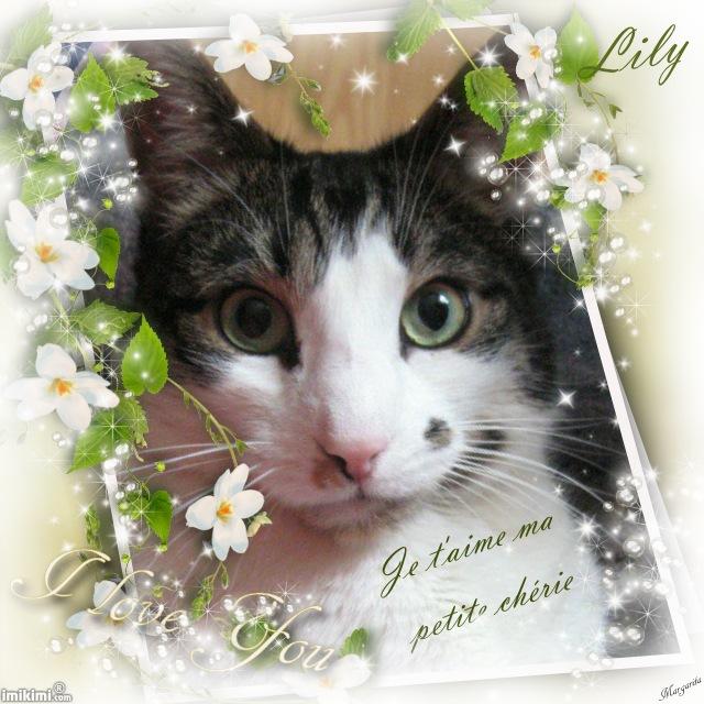 Le blog de Lily Y3mo-116