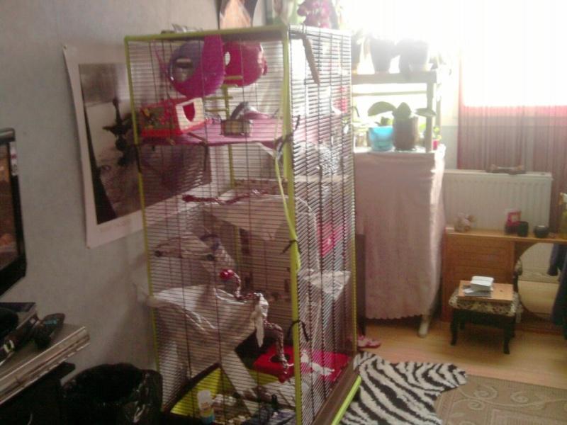 Cherche grande cage [à clôturer merci :)] 30101510