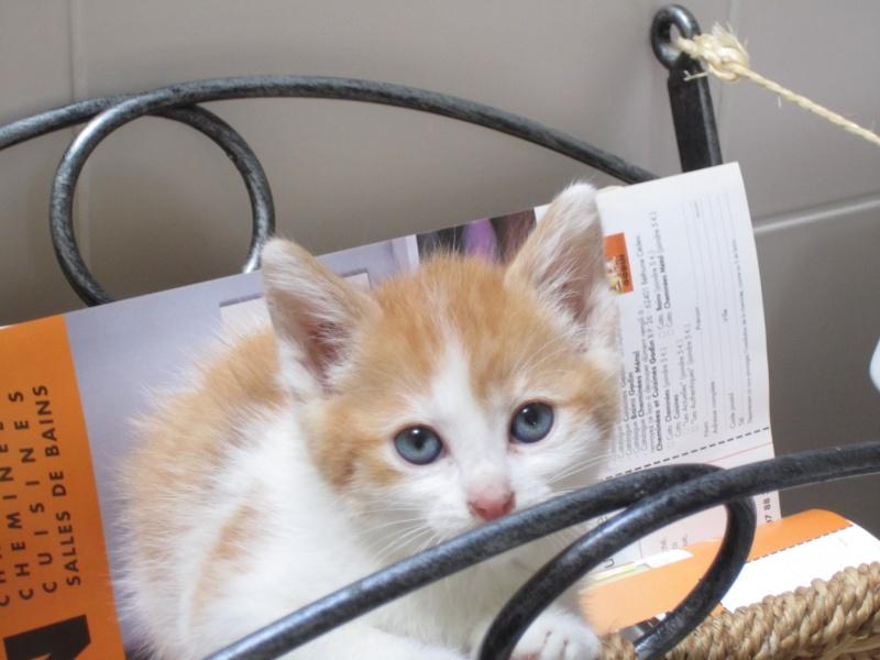 Adoptée, ZORA, chatonne de 3 mois IE 250268730153296 Img_2218
