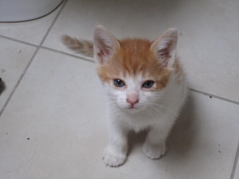 Adoptée, NOISETTE, chatonne de 3 mois IE 250268730153271 Img_2220