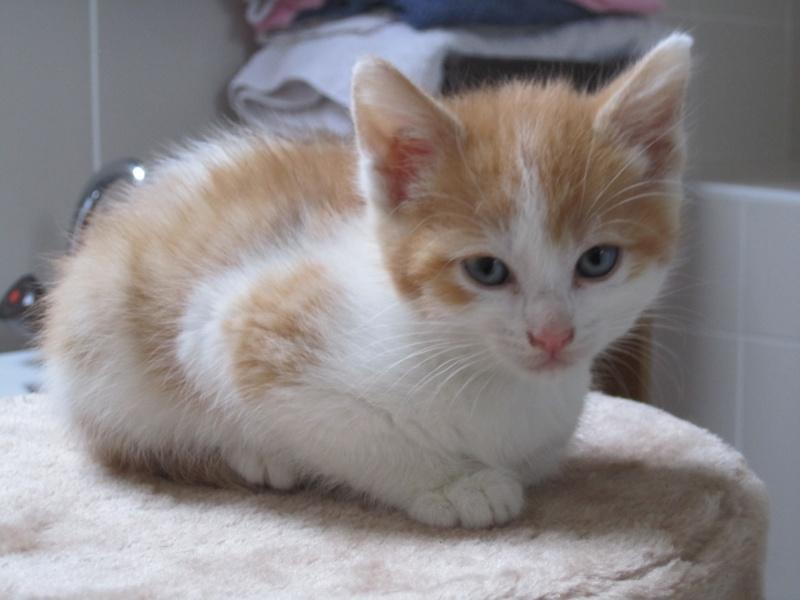 Adoptée, ZORA, chatonne de 3 mois IE 250268730153296 Img_2313