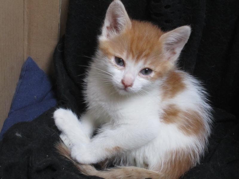 Adoptée, NOISETTE, chatonne de 3 mois IE 250268730153271 Img_2315