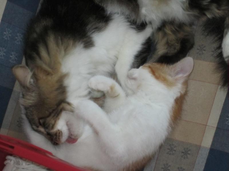 Adoptée, NOISETTE, chatonne de 3 mois IE 250268730153271 Img_2410