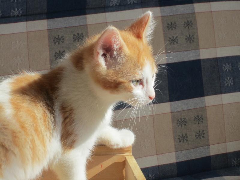 Adoptée, ZORA, chatonne de 3 mois IE 250268730153296 Img_2412