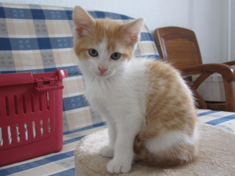 Adoptée, ZORA, chatonne de 3 mois IE 250268730153296 Zora_110