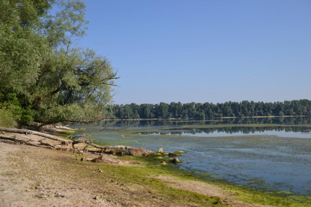 Lacs de montagne qui  virent au vert Dsc_0011