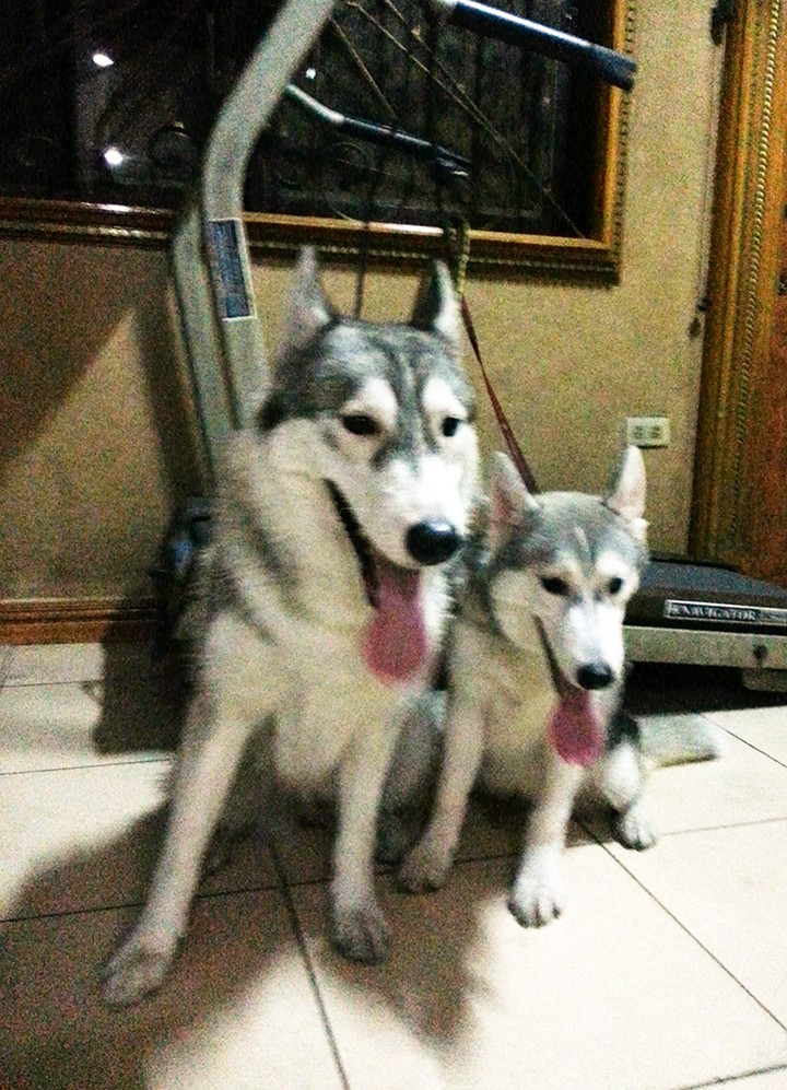Raven and Erika, My Huskies :) - Page 2 20130510