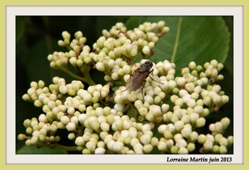 insecte sur boutons de fleurs  Fleur_10