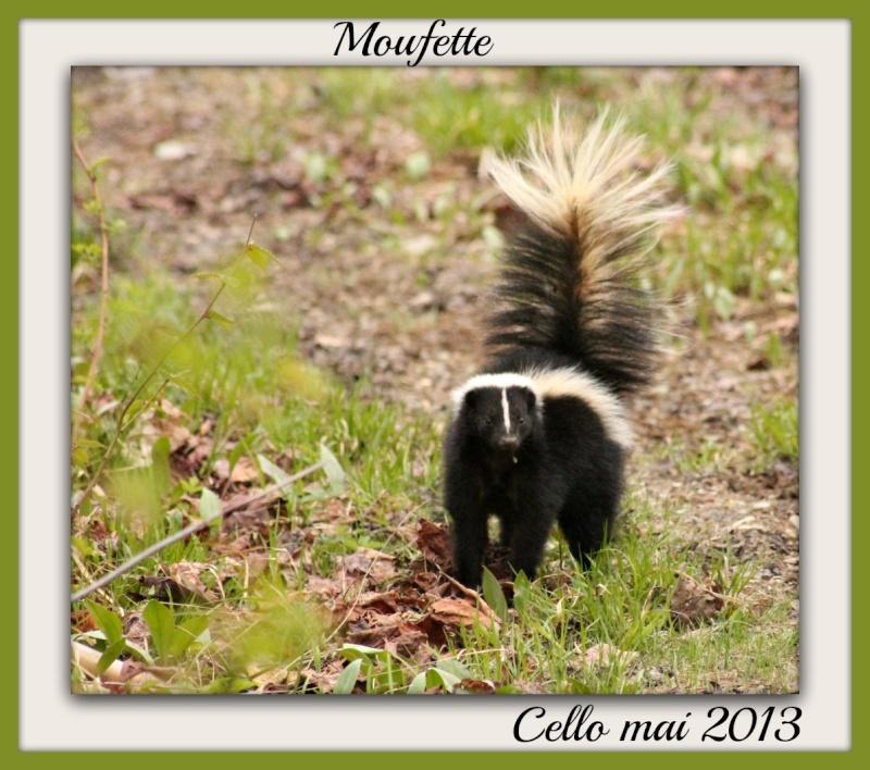 Moufette  Moufet10