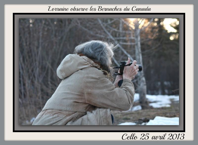 Bernache du Canada photos d'avril Photo_27