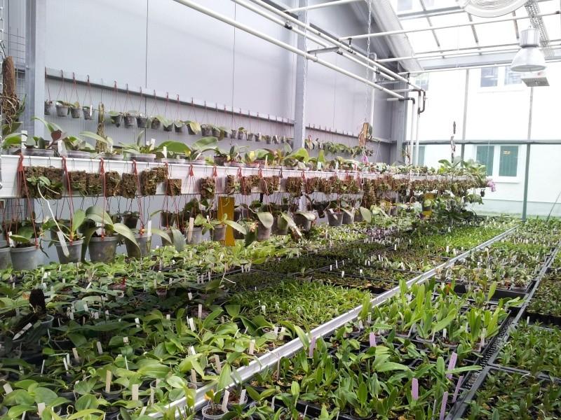 Besuch bei MSB Orchideen in Schwabach 20130411