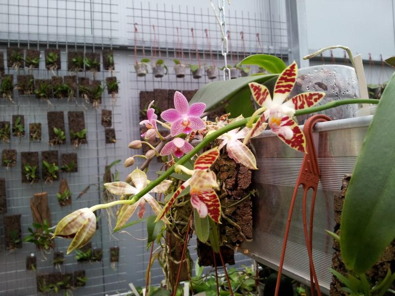 Besuch bei MSB Orchideen in Schwabach 20130412