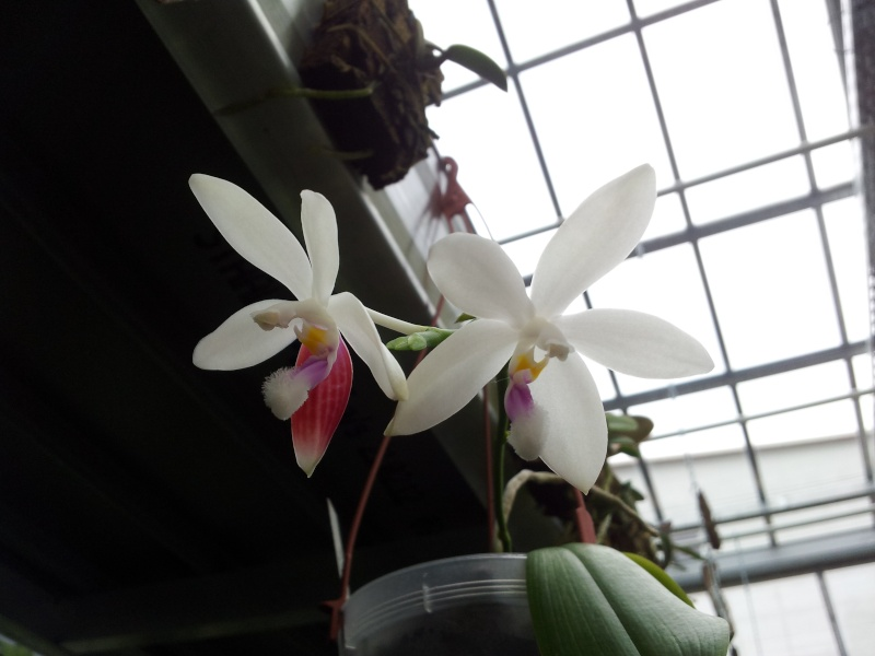 Besuch bei MSB Orchideen in Schwabach 20130413