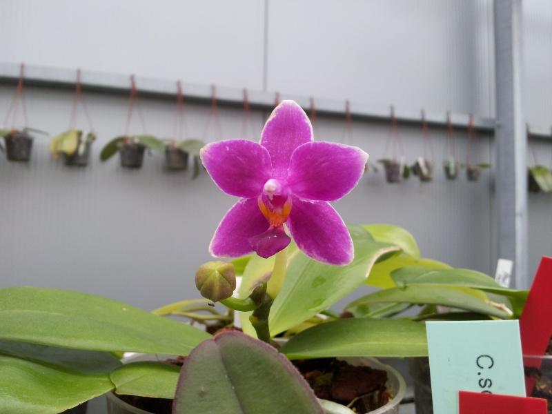 Besuch bei MSB Orchideen in Schwabach 20130414