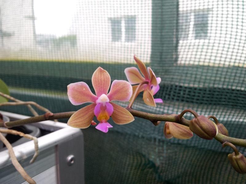 Besuch bei MSB Orchideen in Schwabach 20130415