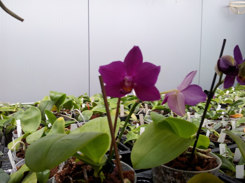 Besuch bei MSB Orchideen in Schwabach 20130416