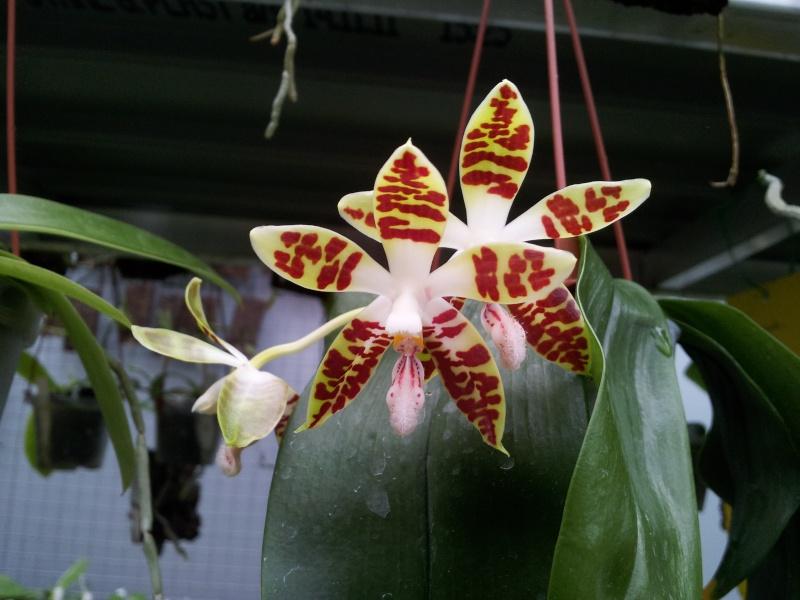 Besuch bei MSB Orchideen in Schwabach 20130417