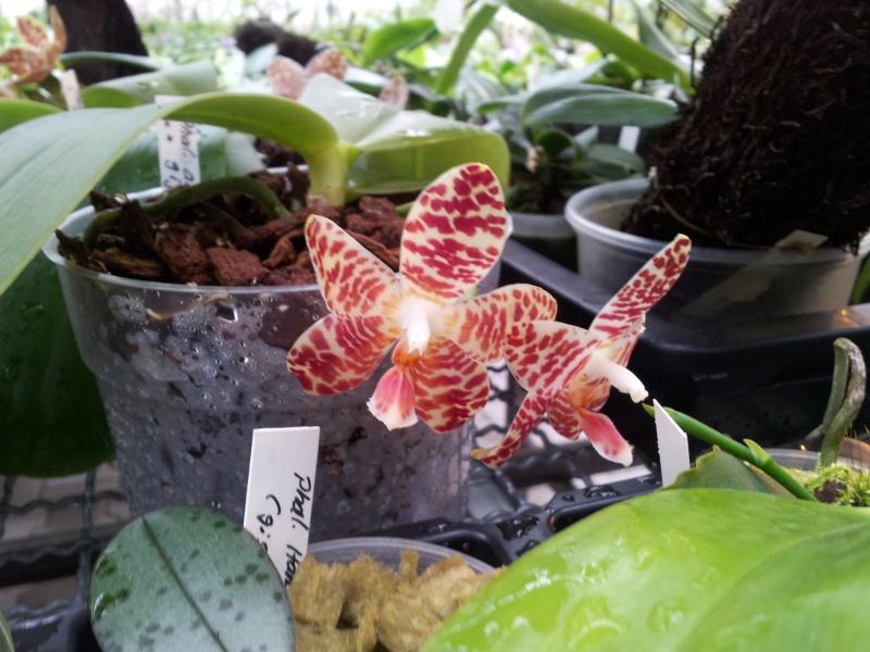 Besuch bei MSB Orchideen in Schwabach 20130418