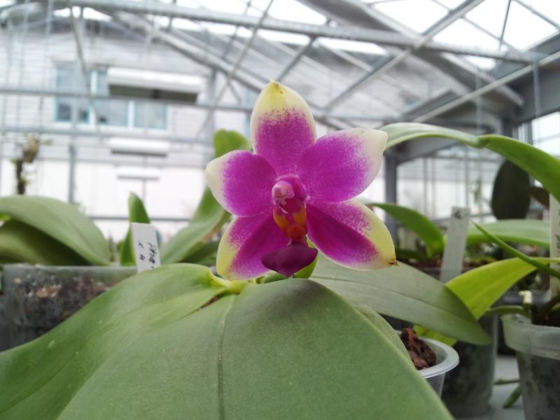 Besuch bei MSB Orchideen in Schwabach 20130419