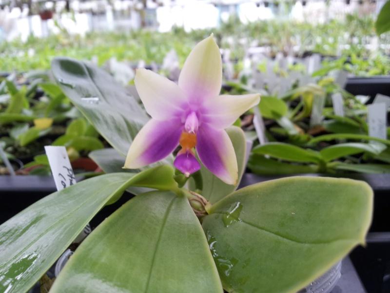 Besuch bei MSB Orchideen in Schwabach 20130420