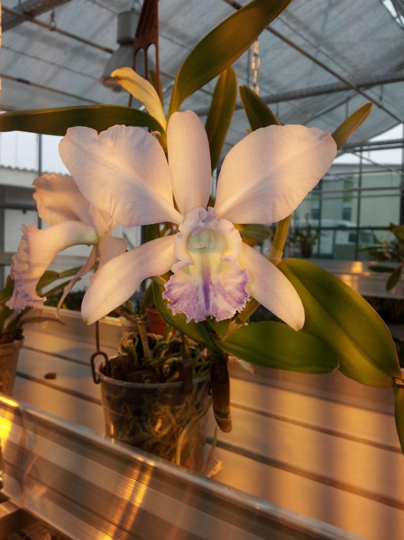 Besuch bei MSB Orchideen in Schwabach 20130422