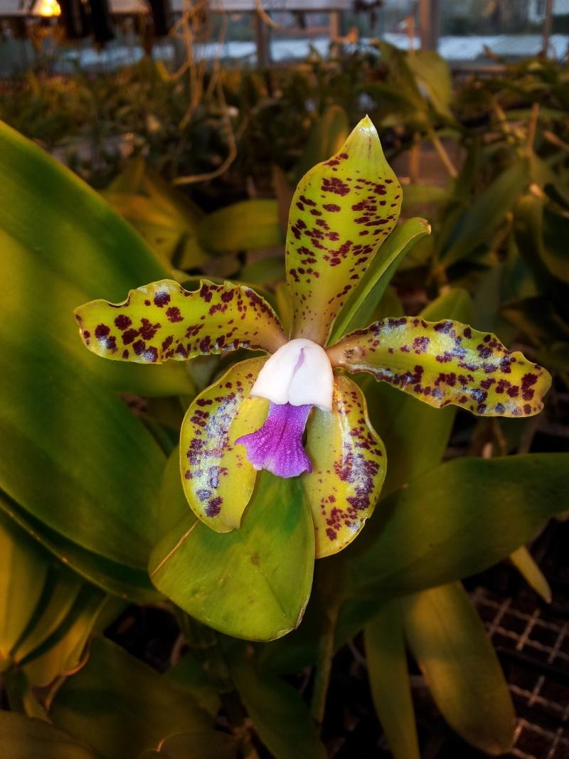 Besuch bei MSB Orchideen in Schwabach 20130423