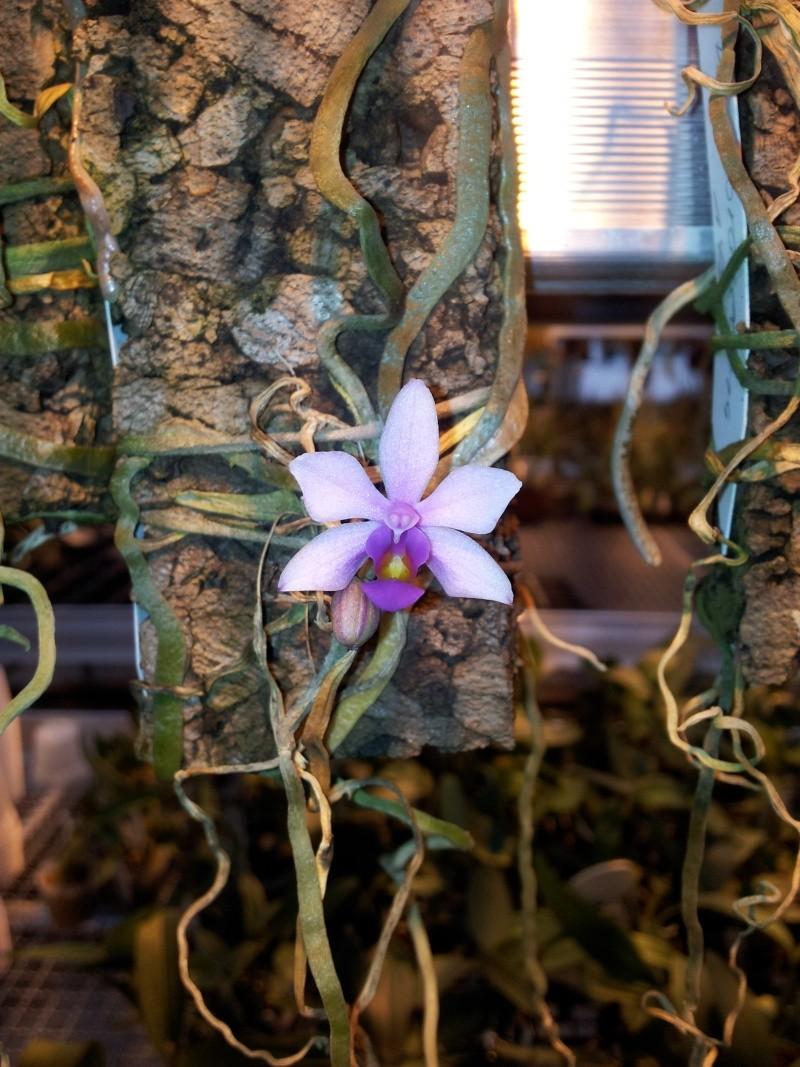 Besuch bei MSB Orchideen in Schwabach 20130424