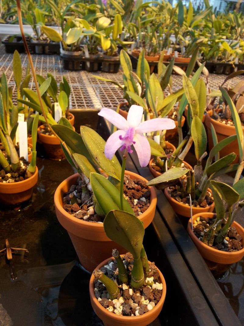 Besuch bei MSB Orchideen in Schwabach 20130426