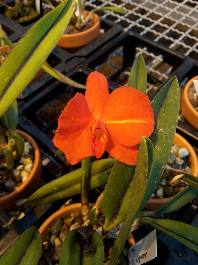 Besuch bei MSB Orchideen in Schwabach 20130427