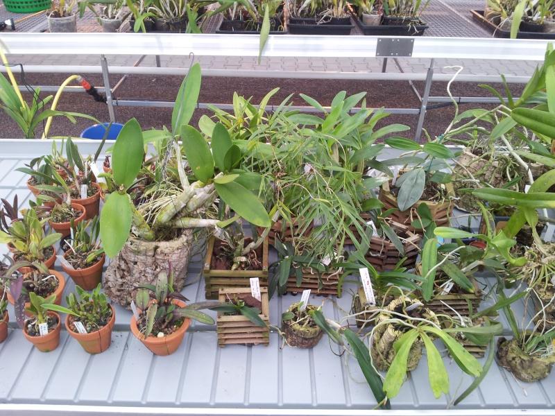 Besuch bei MSB Orchideen in Schwabach 20130428