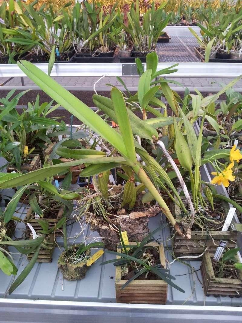Besuch bei MSB Orchideen in Schwabach 20130430